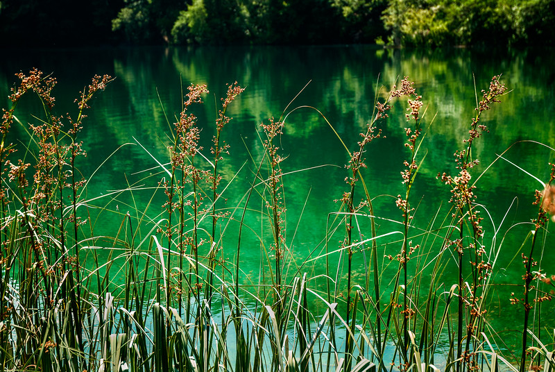 More reeds at Plitvica
