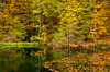 Fall foliage color reflected in a small lake in Plitvice Lakes National Park, Croatia.