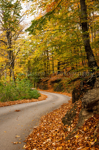 Fall foliage color and a park roadway in Plitvice Lakes National Park, Croatia.