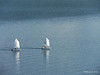 Sailing Dinghies trying to get out the way 08-02-2014 10-33-17