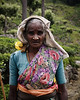 Tea Picker 1
