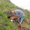 Jelle van der Velde checking a Red-billed Tropicbird nest and collecting camera.  Photo Credit: Nathaniel Miller, Dutch Caribbean Nature Alliance