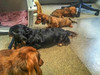 Tic-Tac-Dachshund Line Up