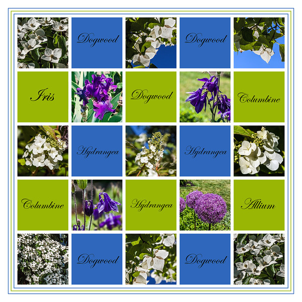 June Blooms - A Sampler
