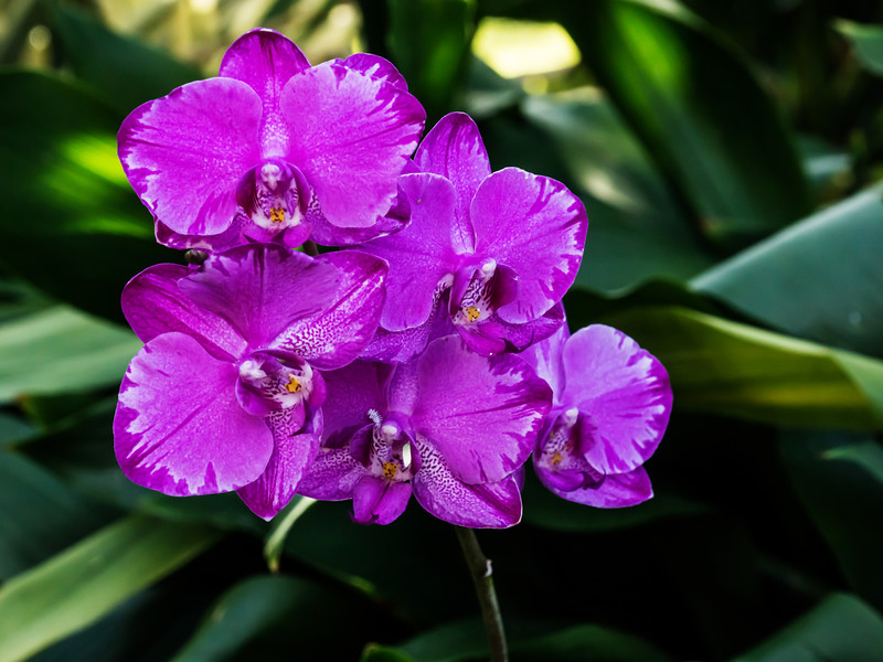 Orchid Optical Illusion