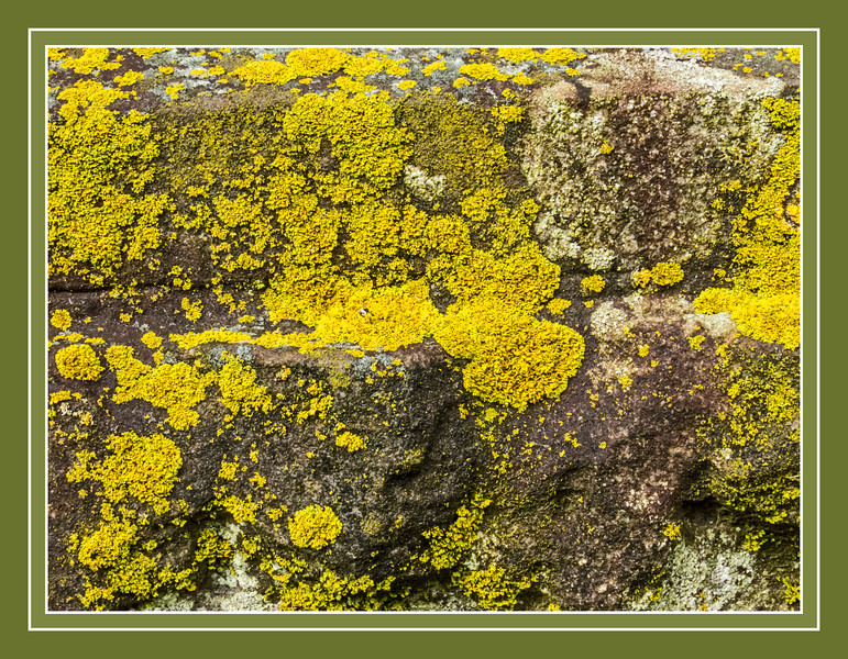 "Bright Lichen on Dark Stone<br /> It's unusual to see such bright yellow and orange forms of this common leafy lichen in my part of the world.  The cool wet conditions of early spring are perfect for bringing forth what I always think of as a 'bloom' of lichen, where the colors all brighten up and growth spurts take place.  The entire cemetery seems covered in this mostly green 'fur coat' these days.<br /> <br /> DP120-2013  Posted April 30; processed April 29<br /> The unframed version is in my 'Lichen' gallery, here:  <a href=""http://smu.gs/10pe9mM"">http://smu.gs/10pe9mM</a><br /> .<br /> Forest Hill Cemetery,<br /> Ann Arbor, Michigan<br /> Taken April 29, 2013"