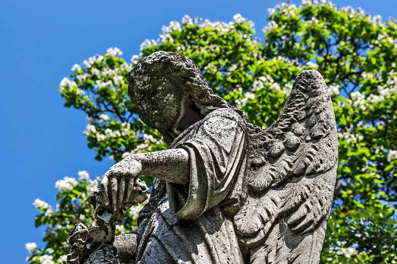 "Catalpa tree standing watch over a watchful angel.<br /> The angel is one of just a few carved statues in this cemetery.  This one is atop the Burg family monument near the front (west) side, slightly north of the entrance gates.  To tell the truth I just wanted an interesting foreground for the magnificent catalpa that was in full bloom.  The statue was convenient.  I wasn't trying to have the tree in sharp focus...just present as an overall impression of loveliness.  For a different, portrait format, view of the scene, <a href=""http://smu.gs/1244uTr"">http://smu.gs/1244uTr</a><br /> <br /> DP167-2013  Posted June 16 (Father's Day); processed June 15.<br /> .<br /> Forest Hill Cemetery, Ann Arbor<br /> June 11, 2013<br /> (Apologies in advance for not being able to comment Sunday, June 15.  I'll try to catch up later.  Thanks for all the views and comments to my recent posts.  Each one is much appreciated.)"