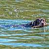 Oct 28 - Retriever Retrieving