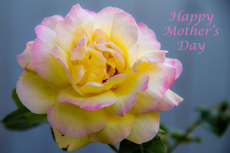 "5-12-2013 ""Happy Mother's Day""  Donna"