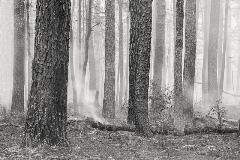 "Smoky Woods, near Broaddus TX  A black and white view of the controlled burn less than a mile from our favorite beach at Lake Sam Rayburn.  The ground was still hot from the burn so I couldn't really enter the woods very well.  When I did enter my feet started heating up and there were fallen trees all around me so I got out right away.  After that I pretty much took shots from the perimeter with my 135mm lens.  I hope the burn worked and will preven forest fires, but it sure was a gloomy sight to see.  I've entered my first photo contest at the Texas Forest Trail Region Facebook page.  One of the awards is the fan favorite voting contest, which comes with a $100.00 award.  If you smuggers can help me win I'll donate the $100.00 to the National Parks.  If you don't mind ""liking"" the Texas Forest Trail Region facebook page, please vote for my ""Warm Grass Sunset"" photo <a href=""http://woobox.com/t58y4t/vote/for/315946"">here</a>.  You can vote once a day for the next week.  THANKS!  Critiques are always welcome.  Daily photo: April 18, 2013, taken March 29, 2013"