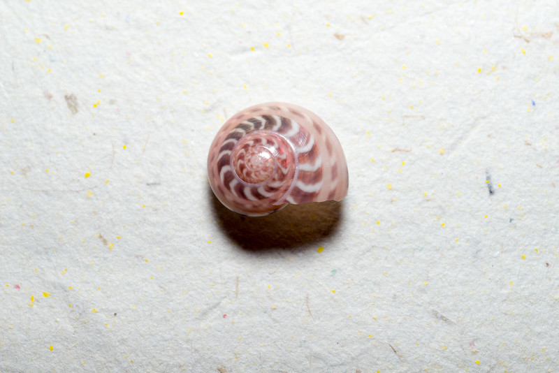 Shell on Paper