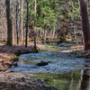 April 25 - Stream in Brookfield State Lands
