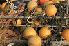 "'Pumpkins' (best larger)<br /> <br /> Happy Halloween!<br /> <br /> Sorry, best I could do for pumpkins and fall grasses here in Japan.  Fishing floats and coiled ropes, taken at the harbour in Naruto, Shikoku Island.  I headed to Shizuoka and the Mount Fuji area this morning on the Bullet Train (Shinkansen) to give some more talks, but hopefully also get some shots of Mt. Fuji in the fall.<br /> <br /> 31/10/14  <a href=""http://www.allenfotowild.com"">http://www.allenfotowild.com</a>"