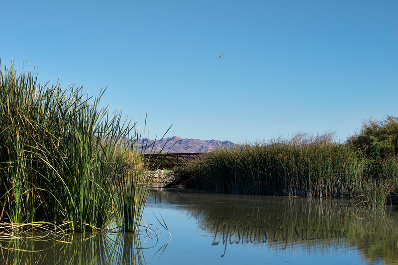 """A beautiful day at Clark County Wetlands Park.<br /> Looks like a dragonfly """"streaked"""" my photo!"""