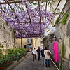 Wisteria canopy provides shade over a picturesque lane in Positano, on Italy's Amalfi Coast