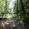 Walking the Purisima Creek Trail at the Purisima Creek Redwoods Open Space Preserve.