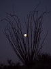 Ocotillo Moonset