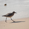 shorebird-crystal-cove-18