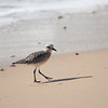 shorebird-crystal-cove-22