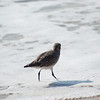 shorebird-crystal-cove-14