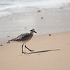 shorebird-crystal-cove-21
