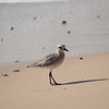 shorebird-crystal-cove-23