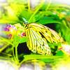 airbrush-paperkite-bfly-stlz-DSC09282