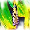 airbrush-paperkite-bfly-stlz-DSC09316