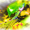 airbrush-paperkite-bfly-stlz-DSC09291