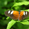 doris-longwing-DSC00115