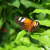 doris-longwing-DSC00114