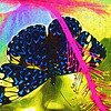 Fun Funky Butterfly Art - beautiful butterflies with enhanced colors. Abstract and lovely.