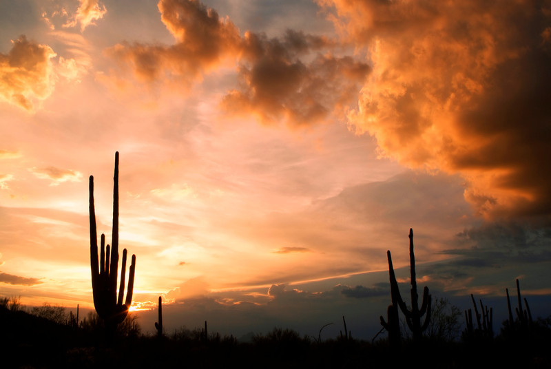 Sunset Clouds, Saguaro National Park West, Tucson, Arizona