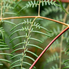 Intricate swamp ferns