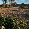 desert like landscape in the nature reserve of Cabo De Gata.<br /> <br /> Almeria,Spain, 2014.