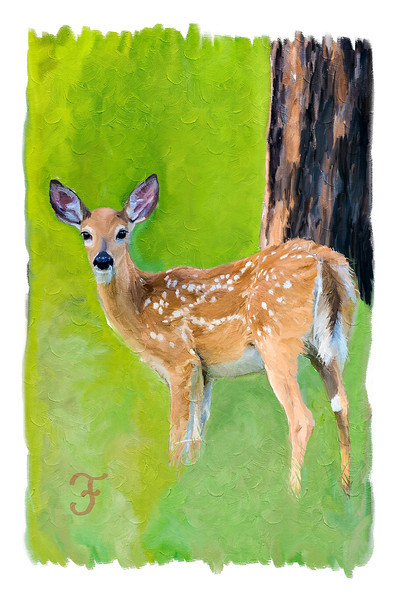 """Spotted""<br /> <br /> Painting of a whitetail fawn (Odocoileus virginianus). The painting was done using a photo as the basis, in Photoshop with the mixer brushes and a Wacom tablet. Original photo taken at Devil's Tower National Monument, Wyoming, USA."