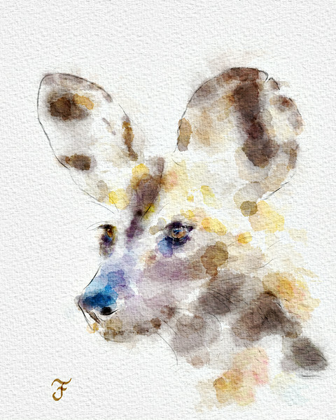 """""""Wild Dog Watercolor""""<br /> <br /> I've been away from my digital watercolor painting for a while. Got the chance to pick it up again and finish this watercolor of an African wild dog (Lycaon pictus). I used Tim Shelbourne's methods and brushes in Photoshop to accomplish this. The photo was originally taken in  Kruger National Park, South Africa."""