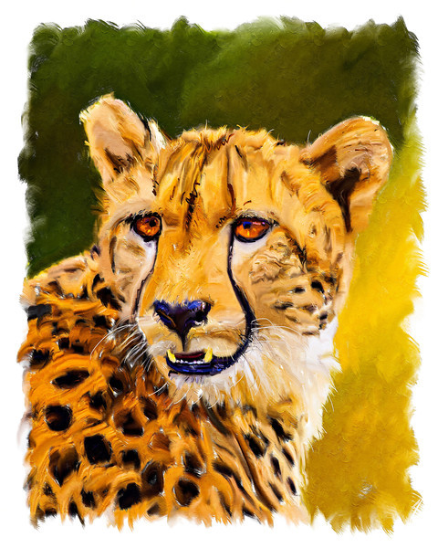 Cheetah Portrait in Diffuse Light