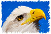 """Patriot""  Done with the mixer brushes in Photoshop and a Wacom tablet. I'm trying out various techniques for the mixer brushes. Each one yields a different look to the painting. The original image was taken at the Rocky Mountain Raptor Program in Ft. Collins, Colorado. Taken under controlled conditions."