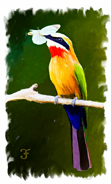 White-Fronted Bee-Eater With Moth