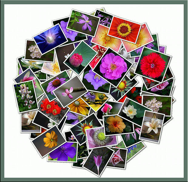 Circular Collage of Flowers