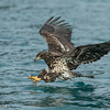Homer Eagles - Juvie in for the Kill
