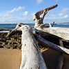 Washed up logs on Kauai beach, Hawaii