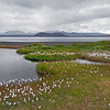 Inland lake and cotton grass, southwest Iceland