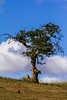 Bickleton-Hwy_Tree-8425