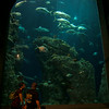 June 28, 2009<br /> Visitors to the S.C. Aquarium watch fish swimming in the great ocean tank. (Photo/Andy Owens)