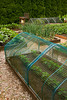 Vegatable raised bed deer rabbit  protection_Doreen Wynja_3606