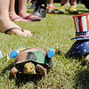Turtles meander across the Adventure Quest lawn during Hometown Celebration festivities at Leonardo's Children's Museum Friday, July 4, 2014. (Staff Photo by BONNIE VCULEK)