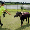 Elisa Salyer (left) holds a lead as Oreo, a miniature horse, shakes off glitter after Enter His Gates summer campers decorated him Friday, June 27, 2014. (Staff Photo by BONNIE VCULEK)