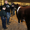 Colby Kokojan listens as his dad, Matt, gives him some pointers outside  wait for the judge's announcement of the grand champion and reserve grand champion steer during the Northwest District Junior Livestock Show at the Chisholm Trail Expo Center Friday, March 7, 2014. (Staff Photo by BONNIE VCULEK)